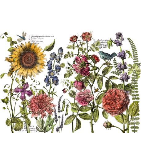 Transfer IOD Botanist's Journal